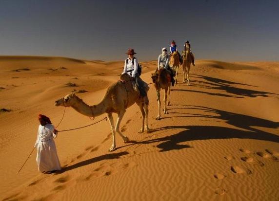 Cool Camel Caravans Carrying Salt Blocks In The Danakil Depression Afar